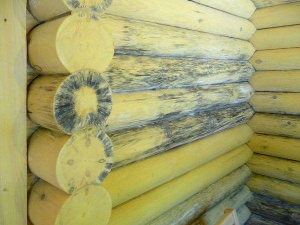 Обработка древесины от грибка