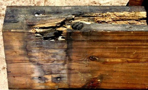 Обработка дерева от грибка и плесени