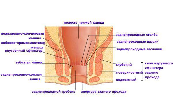 Болит анус