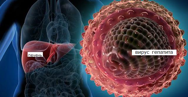 Лечение острых гепатитов: клинические рекомендации