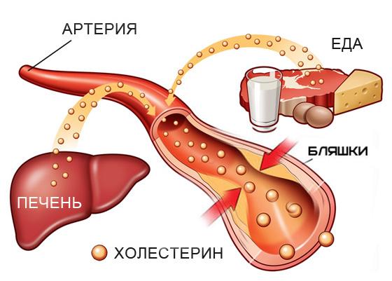 Холестерин общий кровь ммоль л