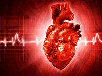 Цикл работы сердца и его фазы