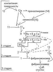 Факторы свертывания крови схема