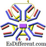 Igg igm в чем отличия антитела