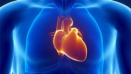 Что полезно кушать для сердца